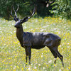 Large Standing Metal Garden Stag